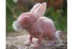 Fetus Bunny