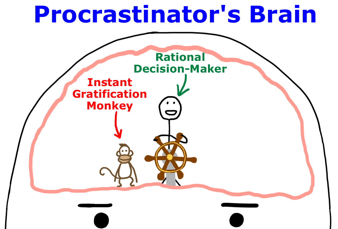 Why Procrastinators Procrastinate Wait But Simple Brain Diagram Clipart Best