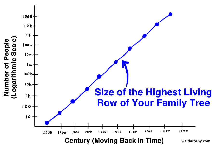 line representing the size of the highest living row of your family tree as you go back in time