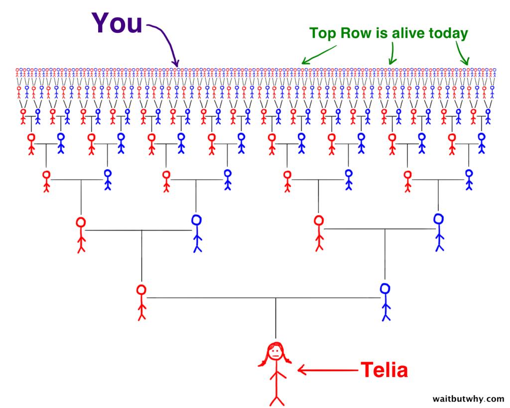 Telia Ancestor Cone
