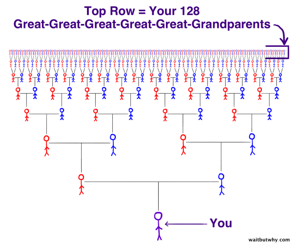 Big Family Tree from you to your 128 great-great-great-great-great-grandparents