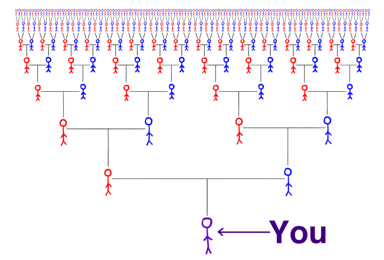 Your Family Tree