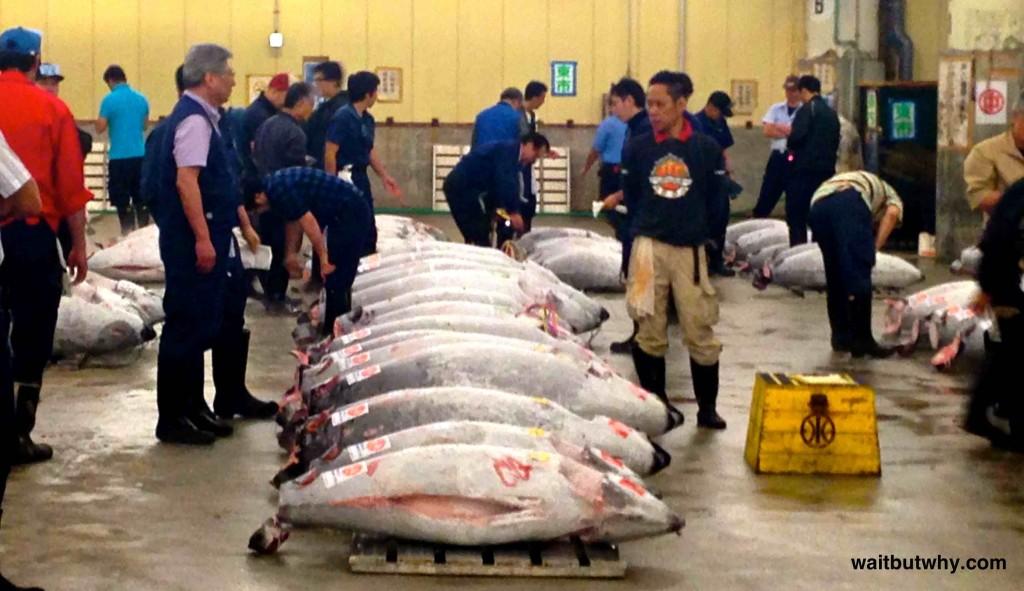 Tsukiji Tuna Auction