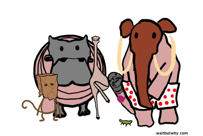 animals embarrassed
