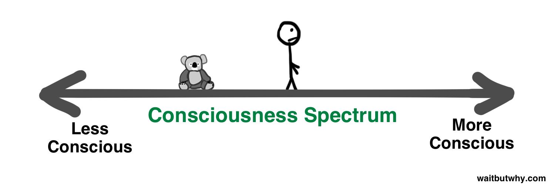 consciousness spectrum