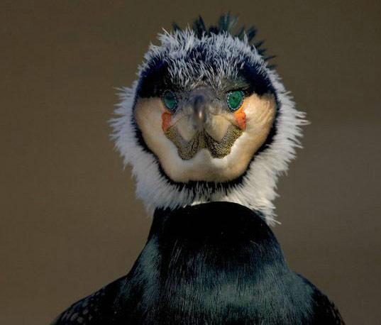 cszfunny-pic-bird