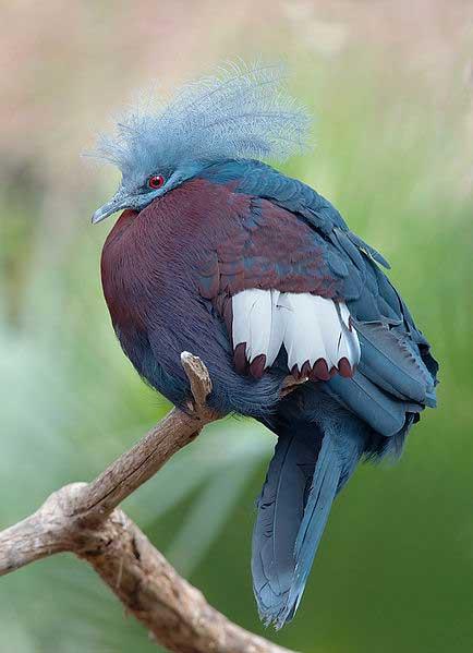 humabirds-paradise-lorentz-national-park-papua-indonesia