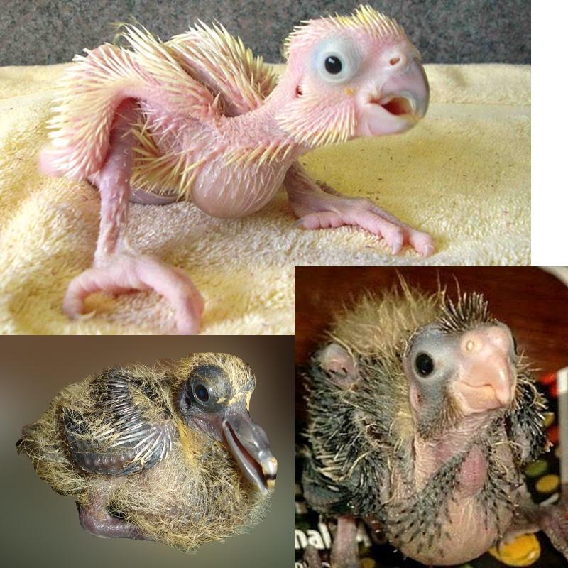 hybrid baby