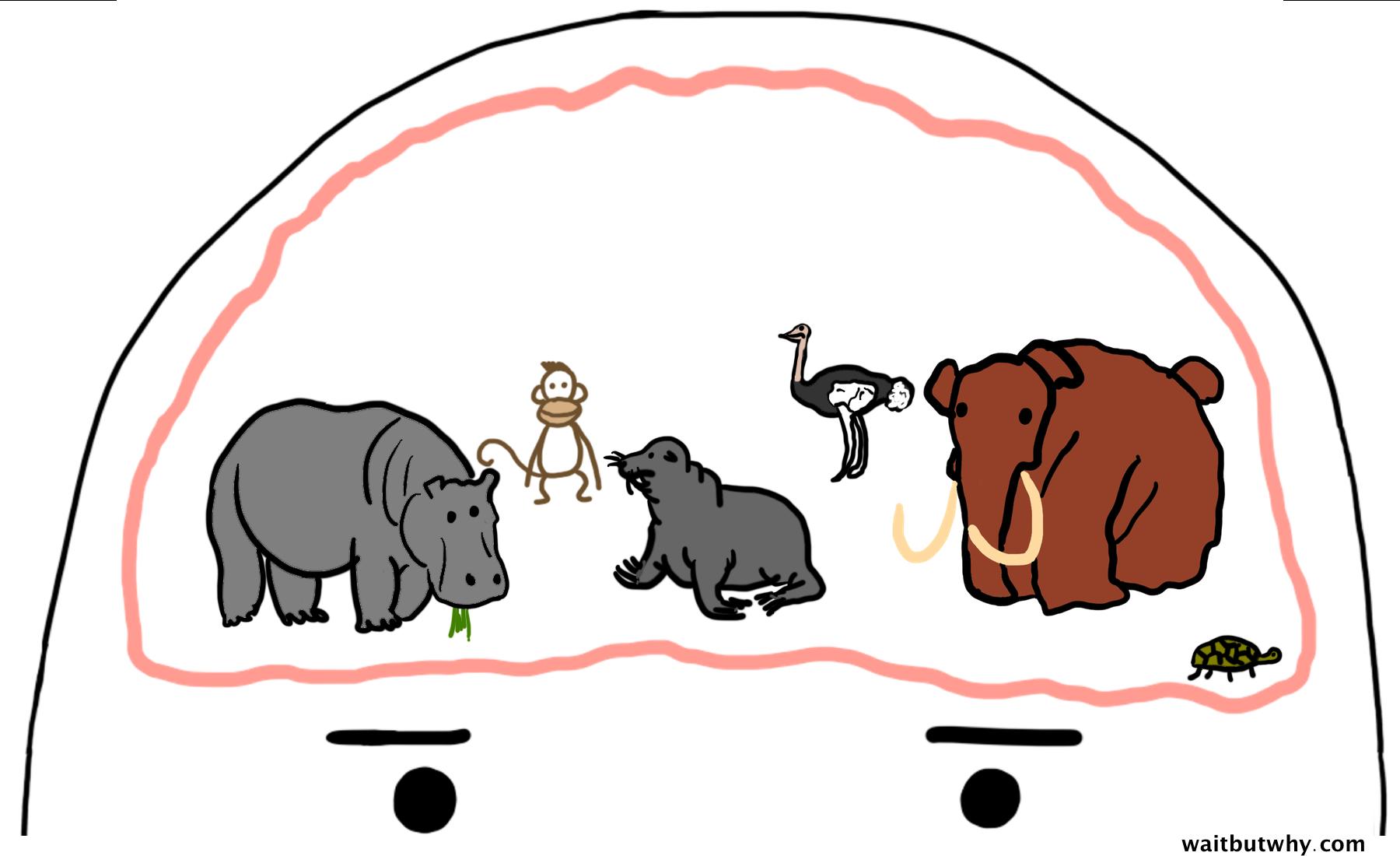 normal animal brain