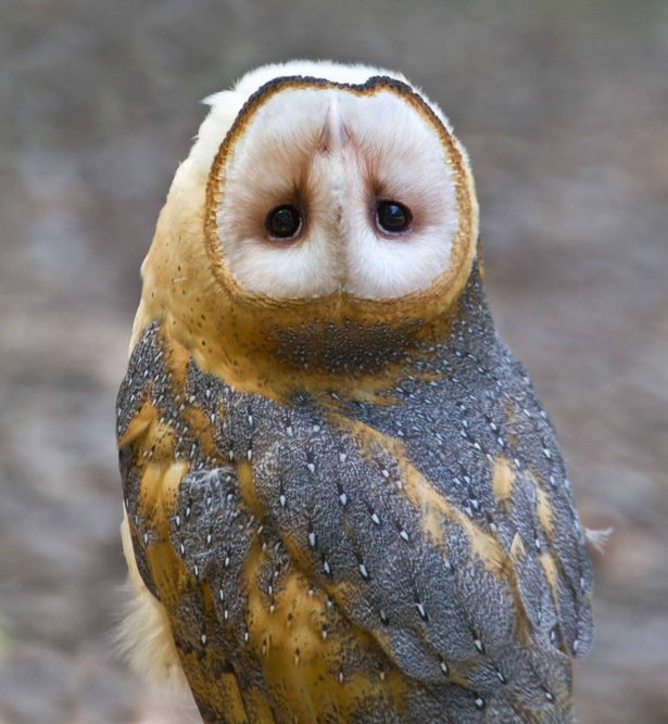 ow£££-Owl-with-an-upside-down-head