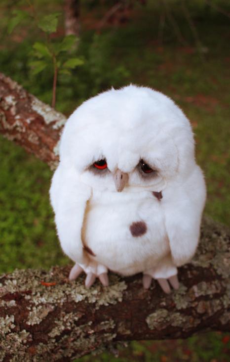 owzSad_Owl_3_by_distasty