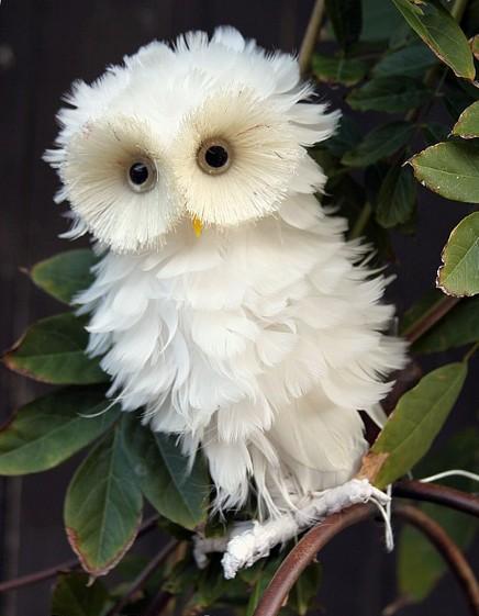 profea16397-funny_white_owl_28_9_2012