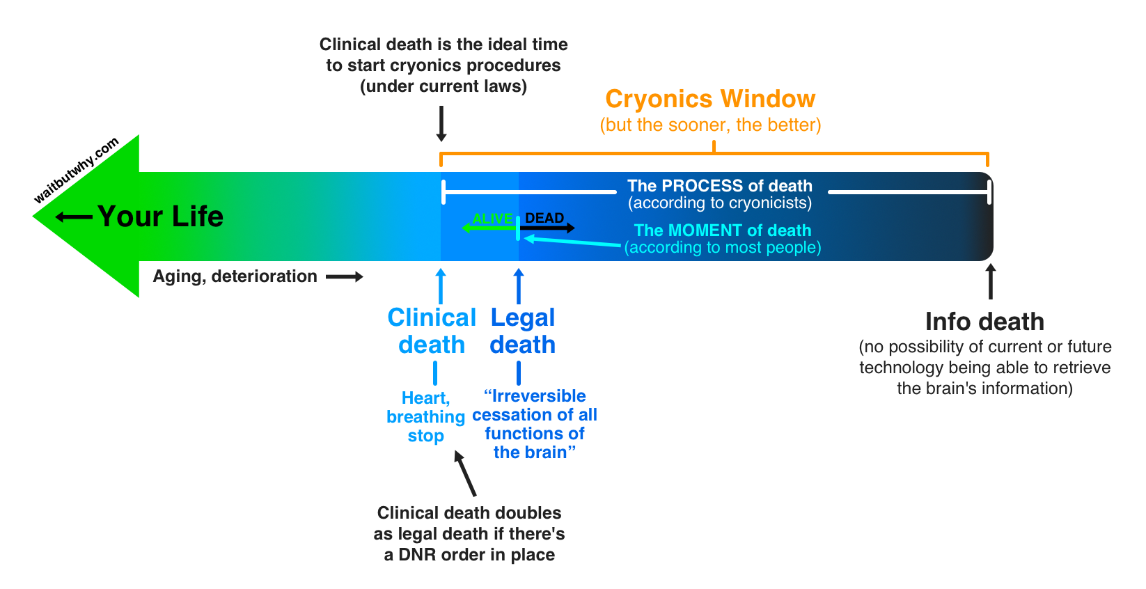 Why cryonics makes sense wait but why for What do publicists do