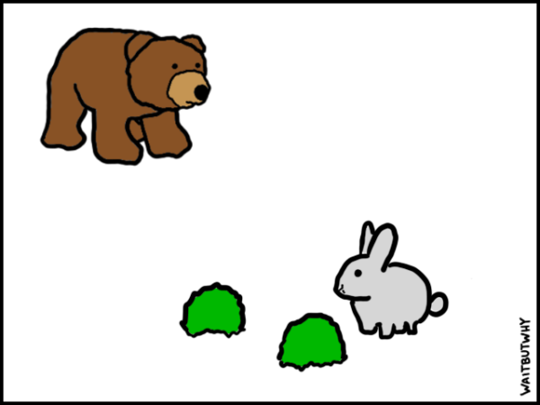 A cute bunny and two shrubs. And a bear.