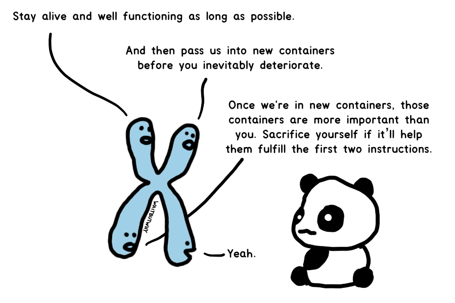Genes talking to a panda: Stay alive and well functioning as long as possible. / And then pass us into new containers before you inevitably deteriorate. Once we're in new containers, those containers are more important than you. Sacrifice yourself if it'll help them fulfill the first two instructions. / Yeah.