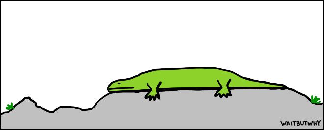 Lizard lying flat on a rock
